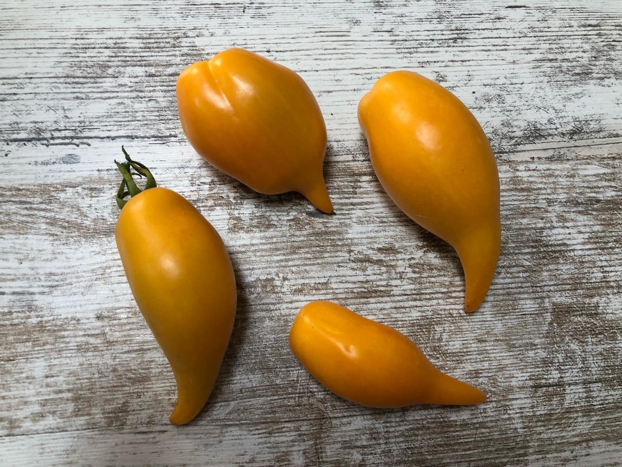 Tomate ''Buratino'' -Pinocchio- 10 Samen