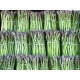Grüner Spargel -Asparagus officinalis- 50 Samen