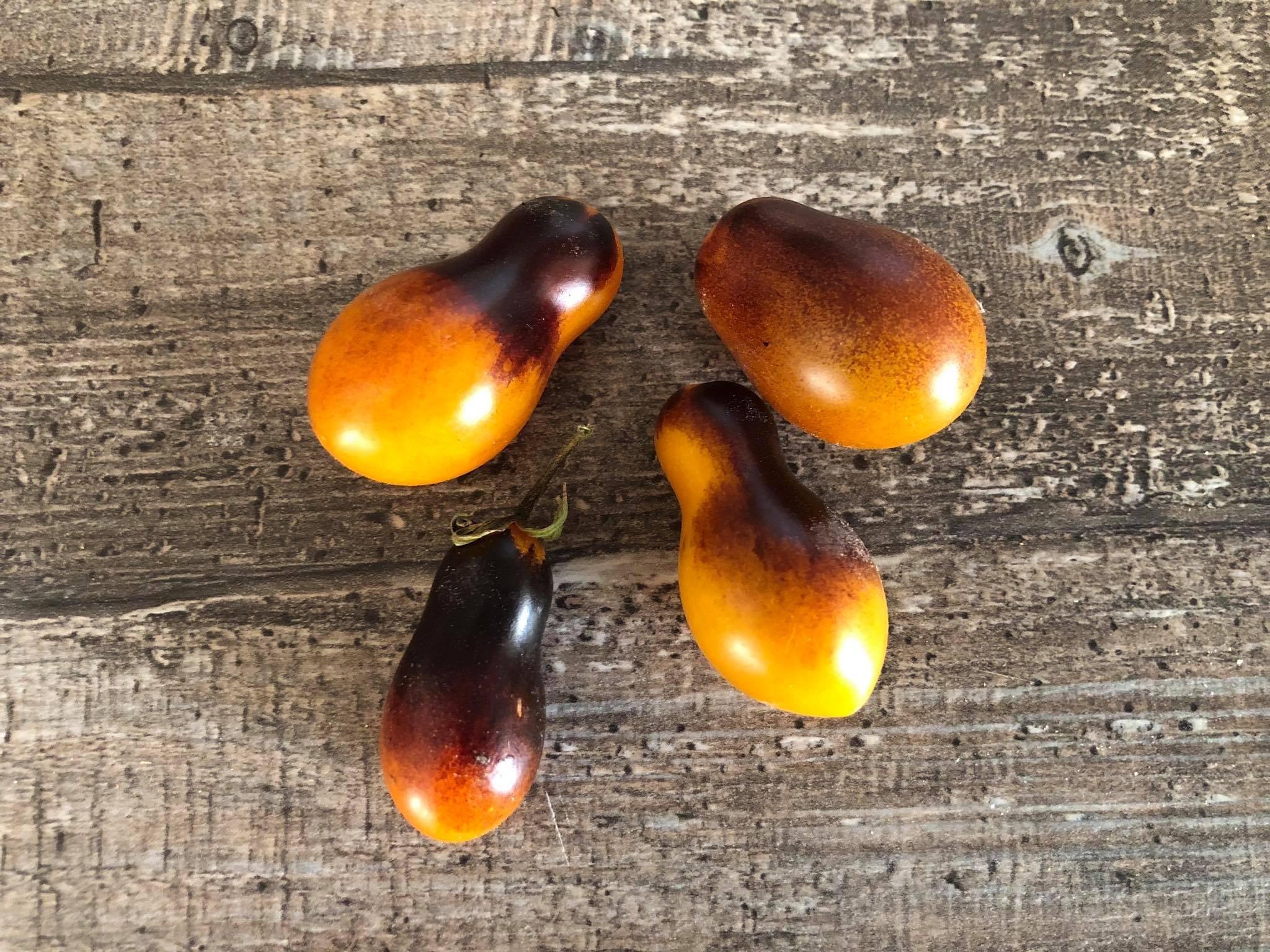 Tomate -Indigo Kumquat- 10 Samen