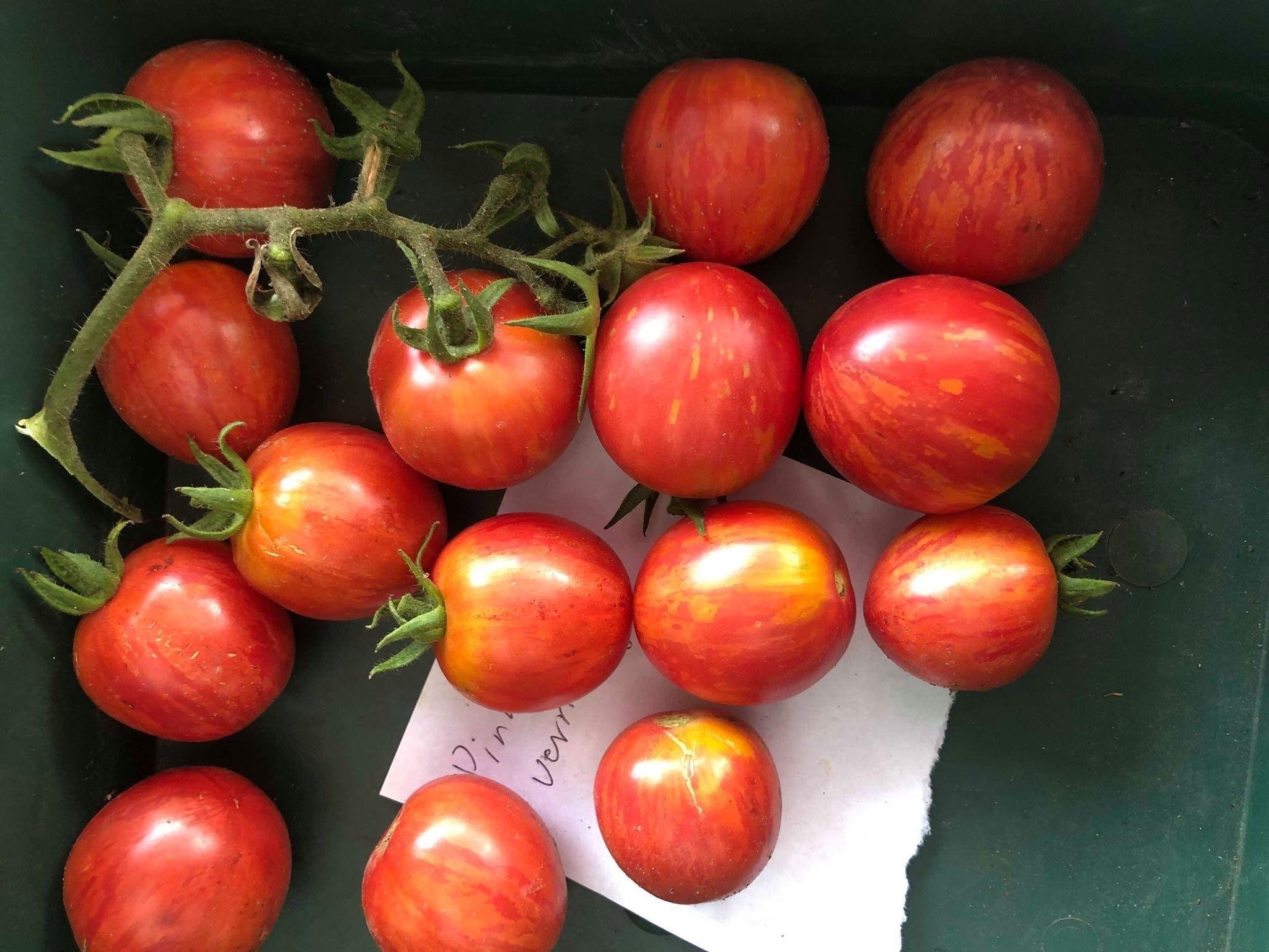 Tomate Pink Vernissage 10 Samen