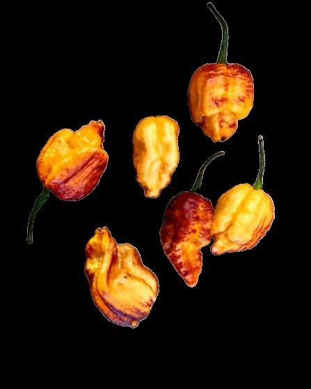Pockmark Orange Chili 1.000 Samen