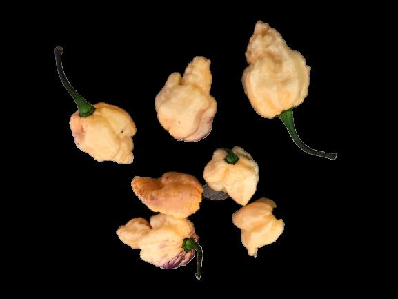 Pockmark Peach Chili 1.000 Samen