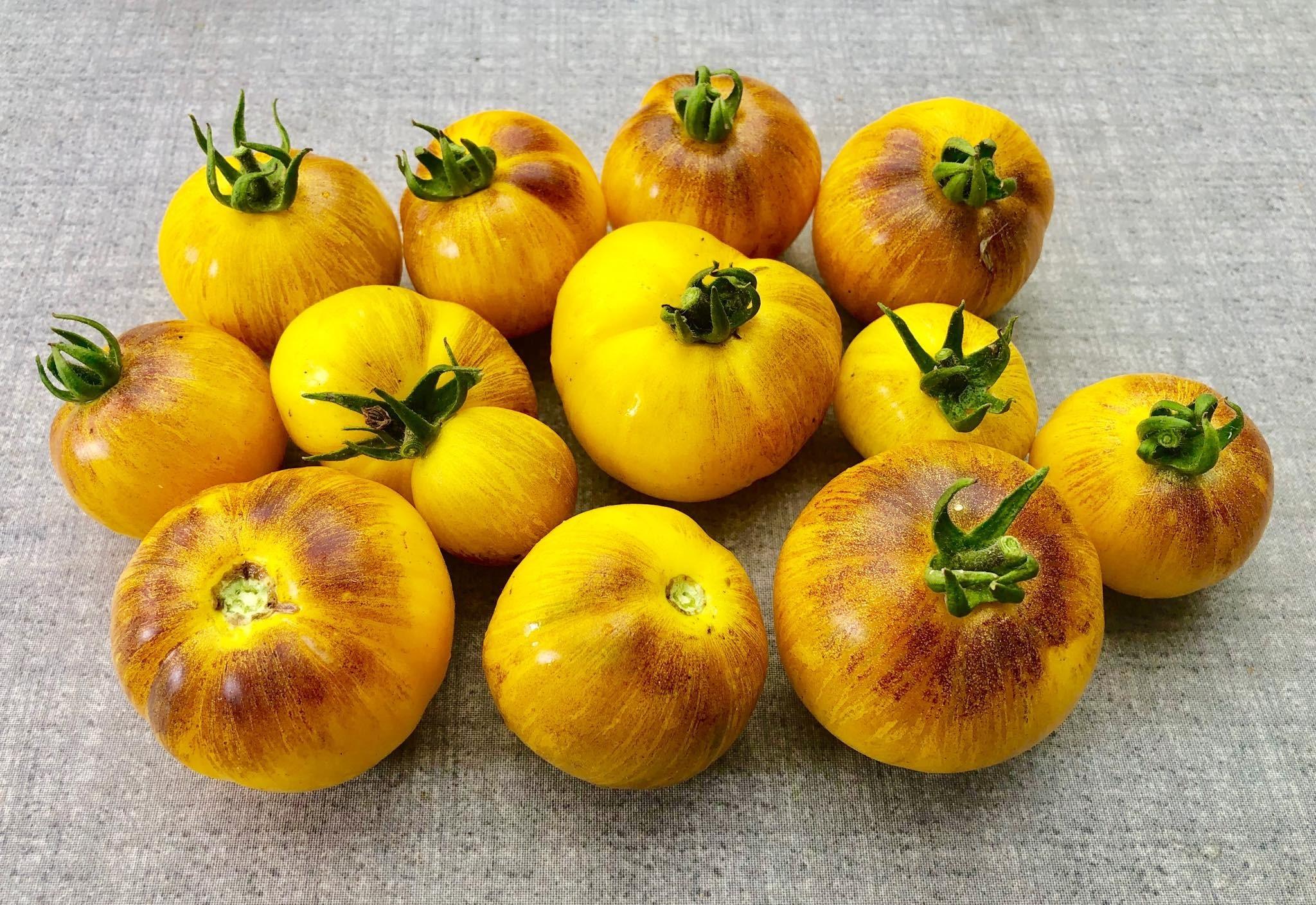 Tomate Primary Colors 10 Samen