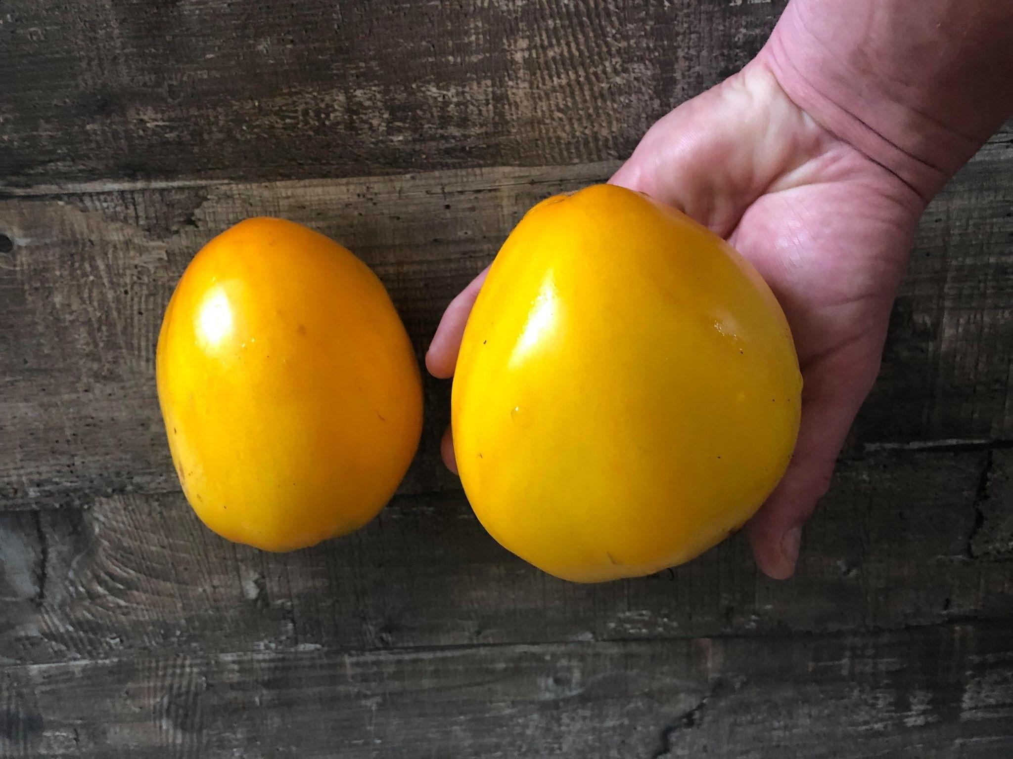 Tomate Sibiriens König Gelb 10 Samen