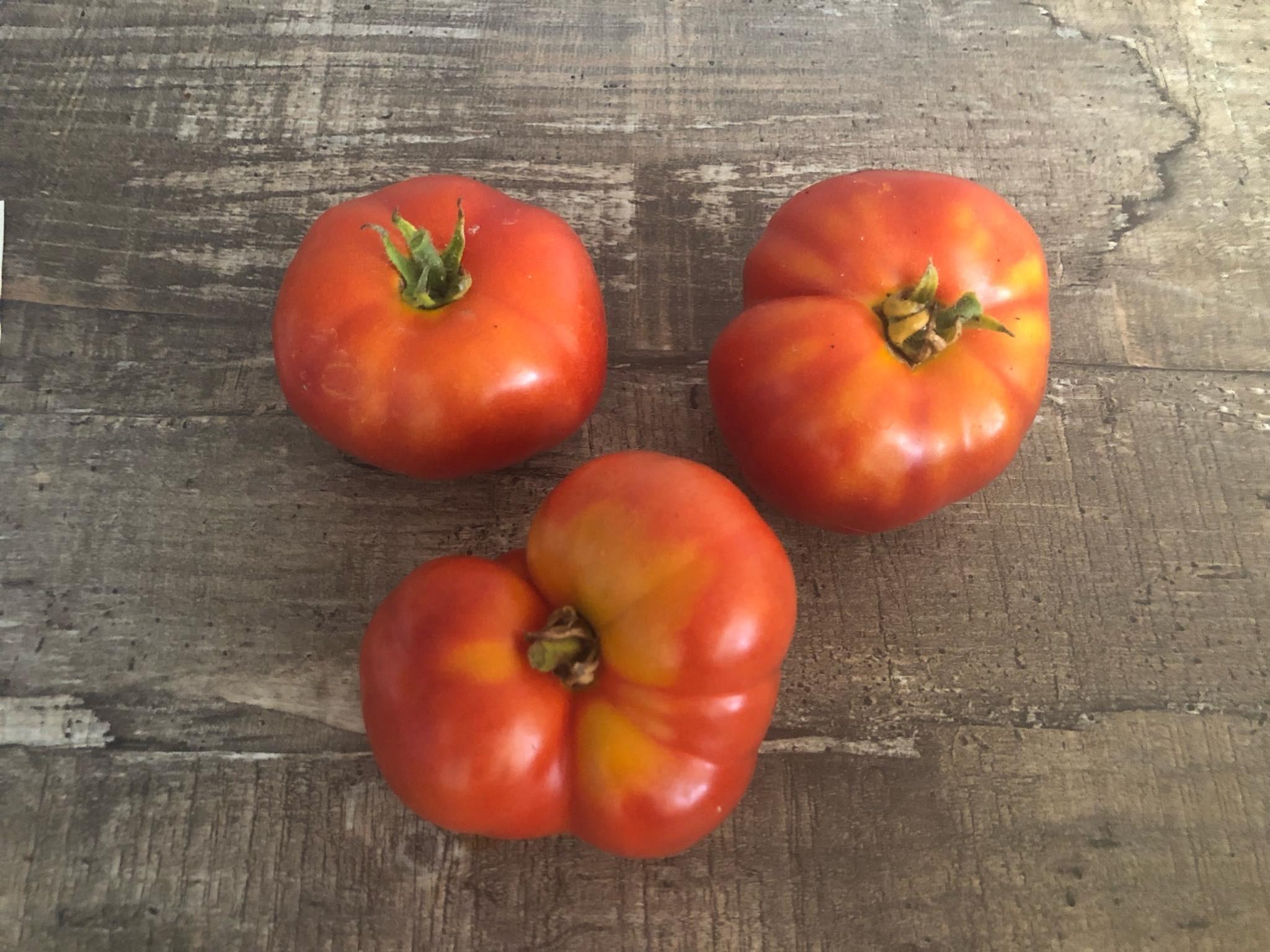 Sibirische Tomate ''Silbertanne'' 10 Samen