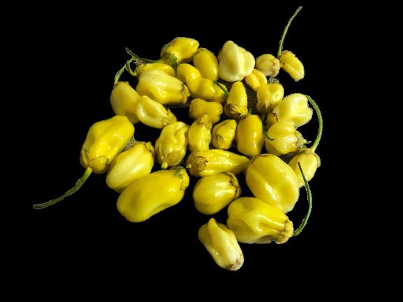 7 Pot Bubblegum Gelb 10 Samen