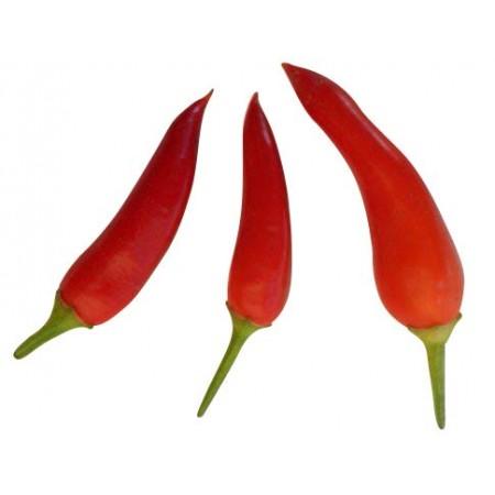 Naschzipfel Rot 10 Samen