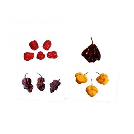 7 Pot Chili Mix 4 Sorten -40 Samen-