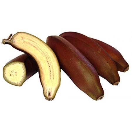 Fruchtbanane -Musa acuminata- 10 Samen