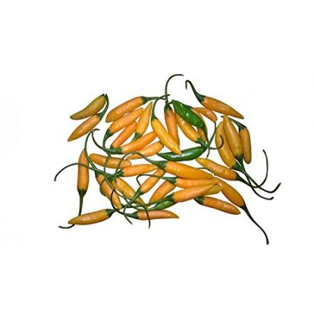 Aji Cito Orange -10 Samen-