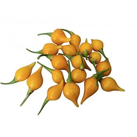 Biquinho Amarelo 10 Samen