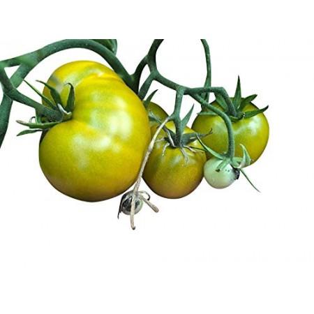 Buschtomate -Lime Green Salad- 5 Samen