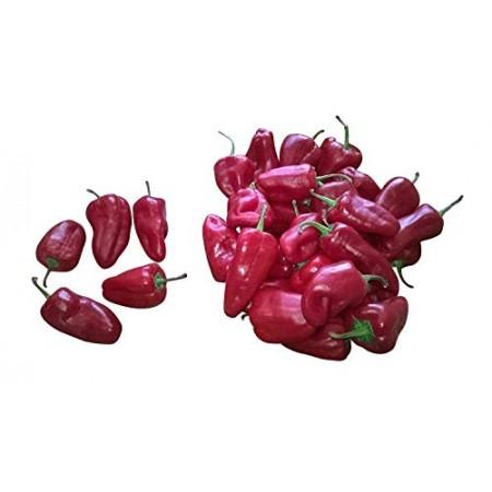Leutschauer Chili-Paprika 10 Samen