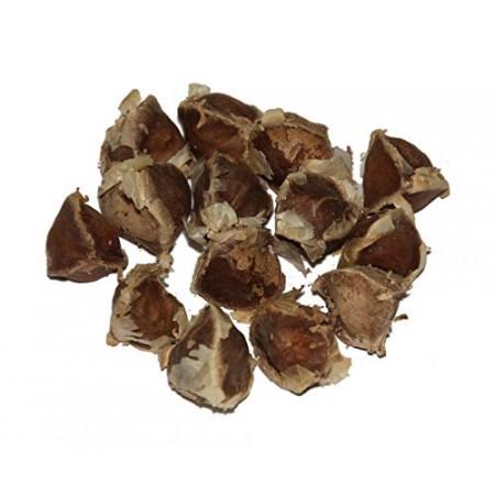 Meerrettichbaum -Moringa oleifera- 1 kg Saatgut
