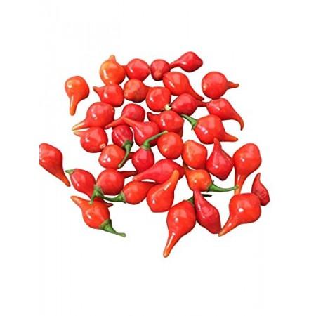 Biquinho Vermelho 10 Samen
