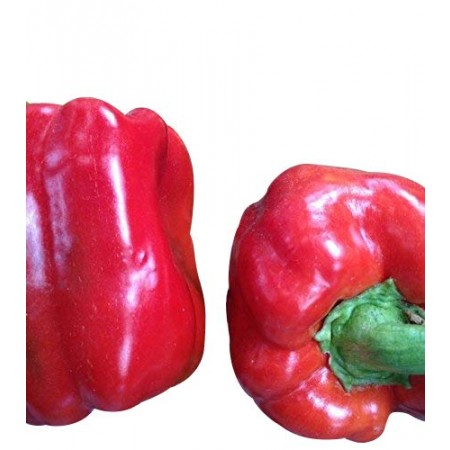 Paprika -Asti Rot- 10 Samen