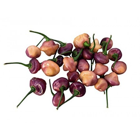 Cheiro Roxa Chili 10 Samen