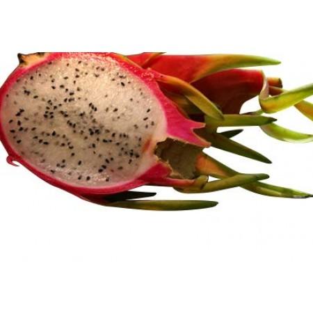 Pitahaya Drachenfrucht -Weißfleischig- 5000 Samen