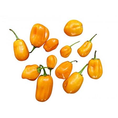 Aji Dulce Amarillo 10 Samen