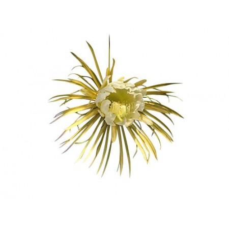 Königin der Nacht -Selenicereus grandiflorus- 15 Samen
