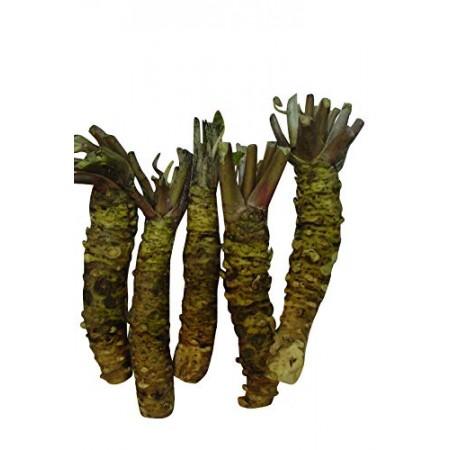 Echter Wasabi -wasabi japonica- 10 Samen
