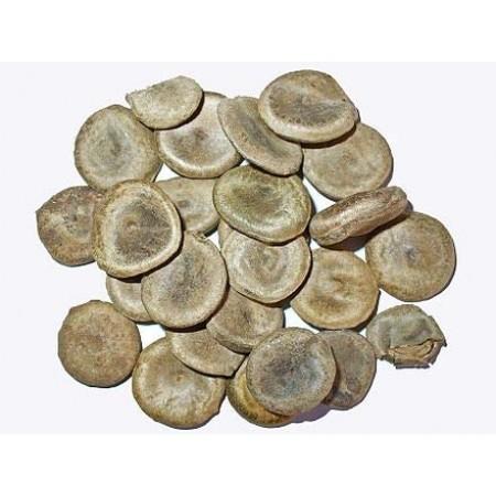Gewöhnliche Brechnuss -Strychnos nux-vomica- 100 Samen
