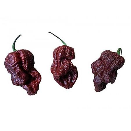 7 Pot Congo-Chocolate 10 Samen