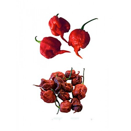 Carolina Reaper Chili Mix 2 Sorten