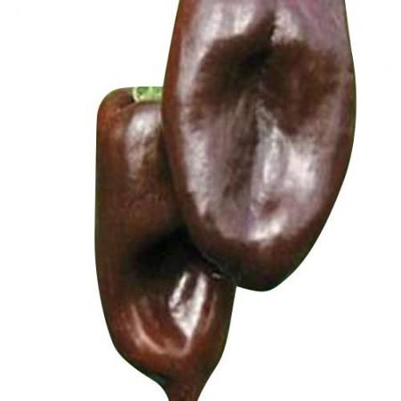 Milder Chili -Mulato Isleño- 10 Samen