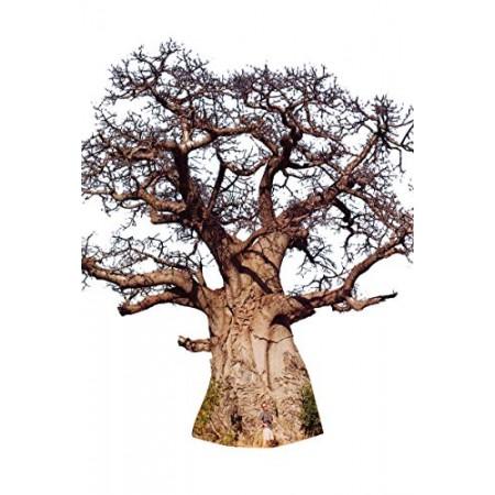 Afrikanische Affenbrotbaum -Adansonia digitata- 10 Samen