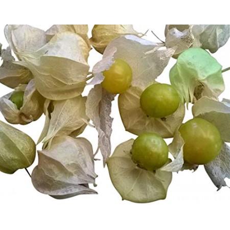 Ananaskirsche (Physalis pruinosa) 10 Samen