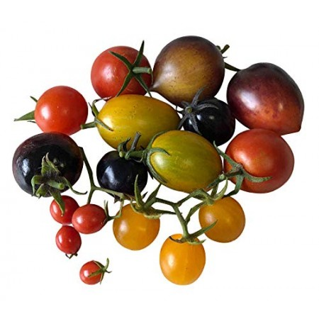 Cherry Tomaten -Bunter Mix- 25 Samen