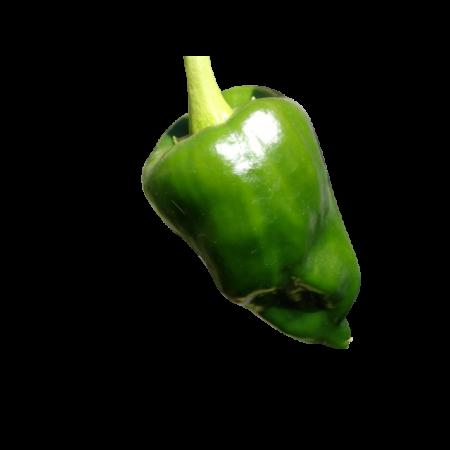 Ancho Chili 1000 Samen