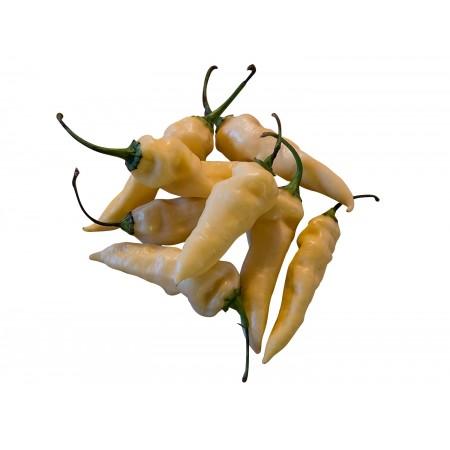 Bhut Jolokia White 1000 Samen