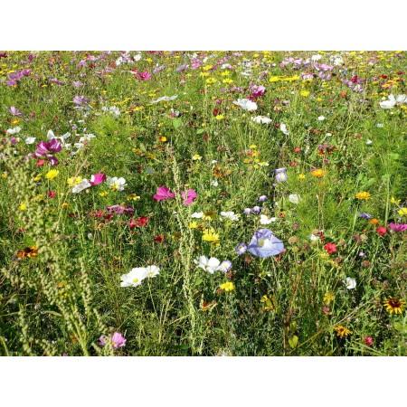 Bienenweide, Blumenwiese Mischung  1000+ Samen