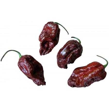 Brazilian Ghost Pepper 1000 Samen