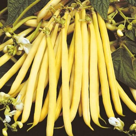 Buschbohne Gelb Samen (Für ca 35 Pflanzen)