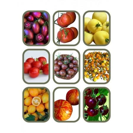 Tomaten Saatgut Set 9 x 10 Samen (Alte & Neue Robuste Sorten)
