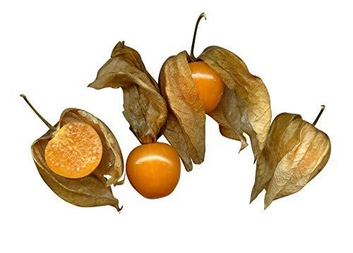 Physalis , Andenbeere (Physalis peruviana) 30 Samen