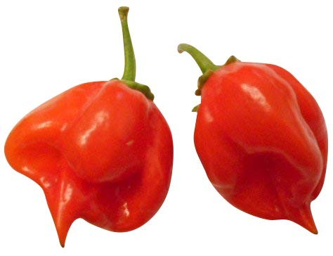 Habanero -Red Savina- 10 Samen